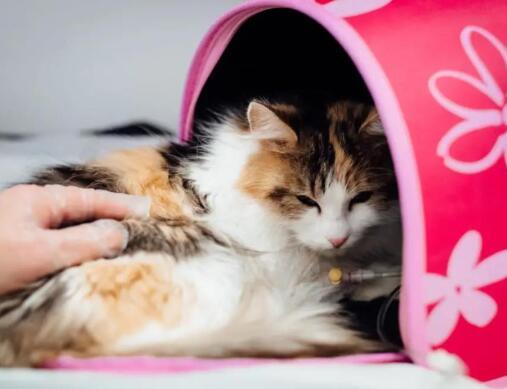 """""""宠业大汇·2021宠物医疗行业高峰论坛""""将于3月19日盛大启幕"""